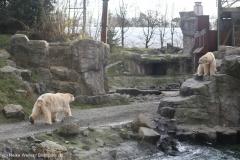 Zoo_Hannover_231215_IMG_2666