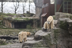 Zoo_Hannover_231215_IMG_2681