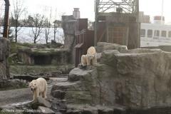 Zoo_Hannover_231215_IMG_2683