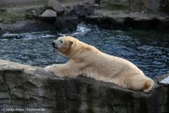 Zoo_Hannover_231215_IMG_2686