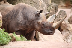 Zoo_Hannover_260615_IMG_6129