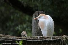 Zoo_Hannover_260615_IMG_6130