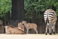Zoo_Hannover_260615_IMG_6137