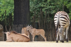 Zoo_Hannover_260615_IMG_6138