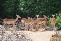 Zoo_Hannover_260615_IMG_6143