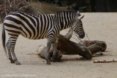 Zoo_Hannover_260615_IMG_6145