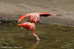 Zoo_Hannover_260615_IMG_6154