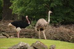 Zoo_Hannover_260615_IMG_6170