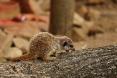 Zoo_Hannover_260615_IMG_6186