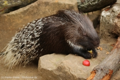 Zoo_Hannover_260615_IMG_6189