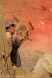 Zoo_Hannover_260615_IMG_6200