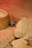 Zoo_Hannover_260615_IMG_6213