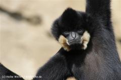 Zoo_Hannover_120427-IMG_6451