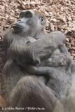Zoo_Hannover_120427-IMG_6480