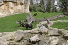 Zoo_Hannover_120427-IMG_6483-2