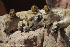 Zoo_Hannover_120427-IMG_6493-2