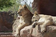 Zoo_Hannover_120427-IMG_6495