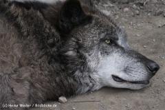 Zoo_Hannover_120427-IMG_6503