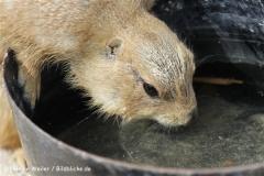 Zoo_Hannover_120427-IMG_6523
