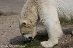 Zoo_Hannover_120427-IMG_6548-3