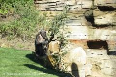 Zoo_Hannover_270913_IMG_2882