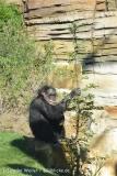 Zoo_Hannover_270913_IMG_2889
