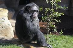 Zoo_Hannover_270913_IMG_4627