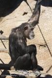 Zoo_Hannover_270913_IMG_4630