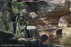 Zoo_Hannover_270913_IMG_4633