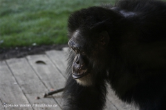 Zoo_Hannover_270913_IMG_4663