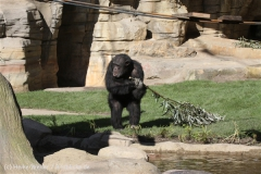 Zoo_Hannover_270913_IMG_4683