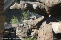 Zoo_Hannover_270913_IMG_4684