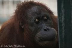 Zoo_Hannover_270913_IMG_4715