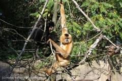 Zoo_Hannover_270913_IMG_4732