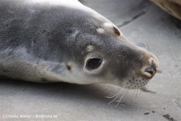 Zoo-Hannover-280510-IMG_2219