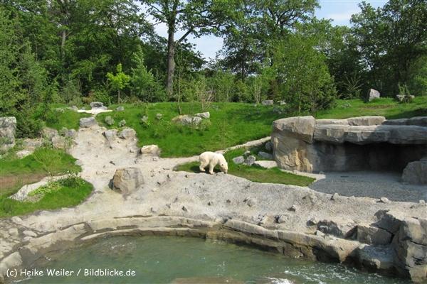 Zoo-Hannover-280510-IMG_2276-0967