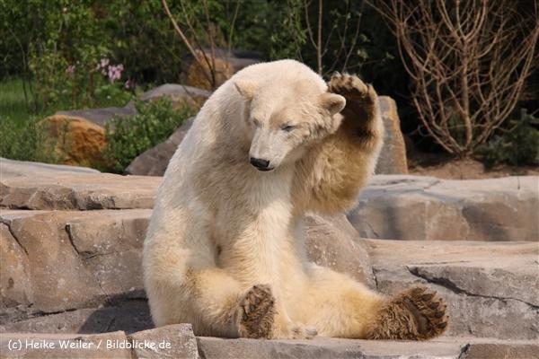 Zoo-Hannover-280510-IMG_2449