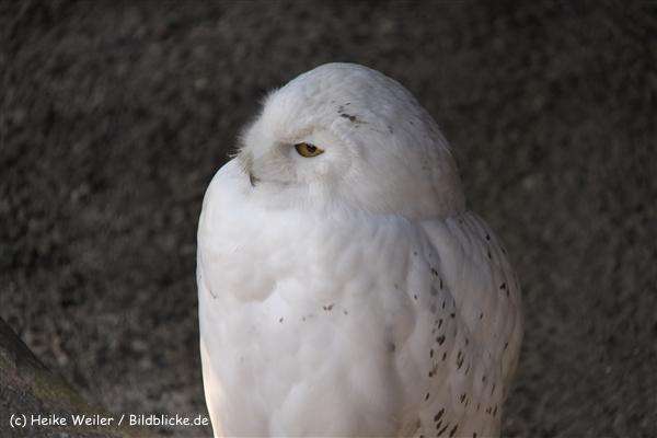 Zoo-Hannover-280510-IMG_2585