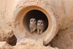 Zoo-Hannover-280510-IMG_2036
