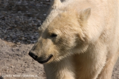 Zoo-Hannover-280510-IMG_2280