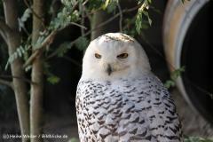 Zoo-Hannover-280510-IMG_2586