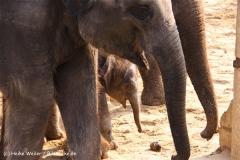 Zoo-Hannover-280510-IMG_2600
