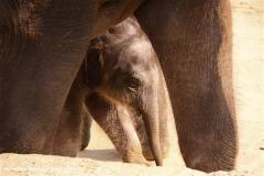 Zoo-Hannover-280510-IMG_2609