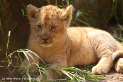Zoo Hannover 290411- IMG_1773