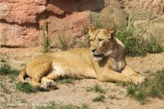 Zoo Hannover 290411- IMG_1786