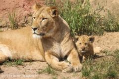 Zoo Hannover 290411- IMG_1800