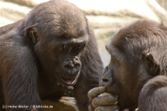Zoo Hannover 290411- IMG_2021