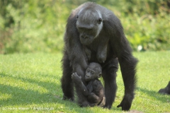 Zoo Hannover 290411- IMG_2028