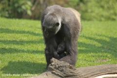 Zoo Hannover 290411- IMG_2035