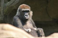 Zoo Hannover 290411- IMG_2080
